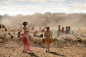 Shepherd Life Pakistan