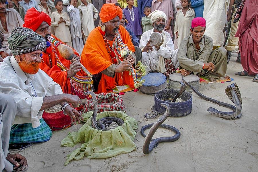 Snake charmer Pakistan